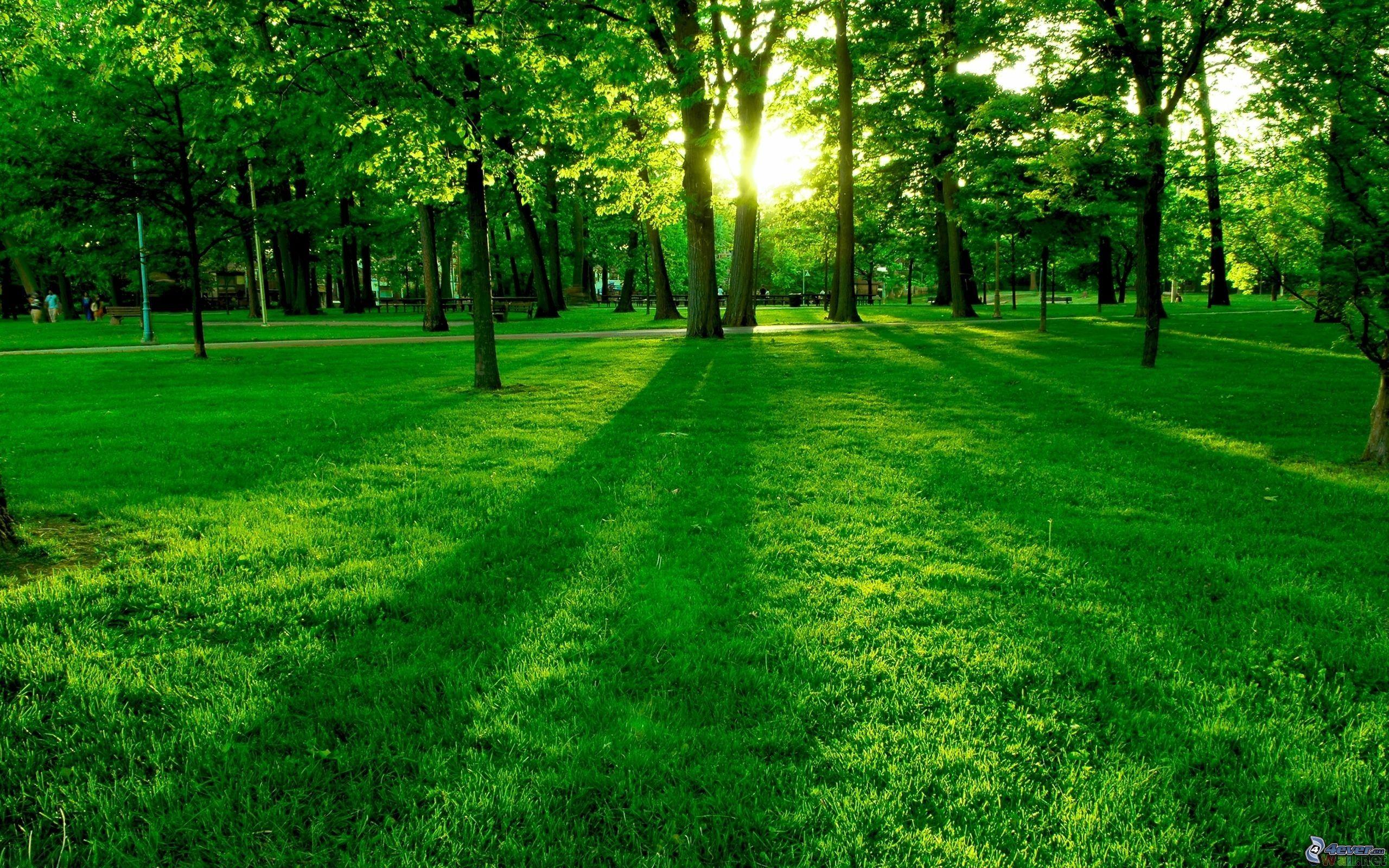 [Obrazek: zielona-trawa,-park,-zachod-slonca-za-dr...154738.jpg]